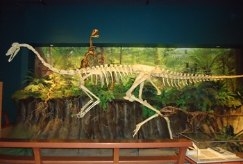 Dynamic ornithomimid vs. dromaeosaurid display. McWane Science Center, Birmingham, AL.