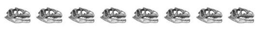 8.0 skulls