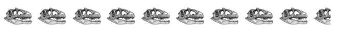 9.5 skulls