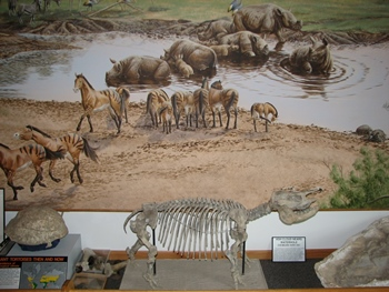 Baby Teleoceros fossil in front of a beautiful mural depicting life at the ancient water hole before the ashfall event. Ashfall Fossil Beds State Park, Orchard, NE.