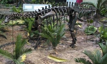 Apatosaurus baby. Carnegie Museum of Natural History, Pittsburgh, PA.