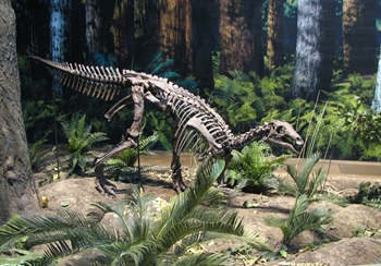 Camptosaurus strolling through the lush environment of the Jurassic, Carnegie Museum of Natural History, Pittsburgh, PA.