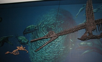 The late Cretaceous plesiosaur Dolichorhynchops chases a Hesperornis. Carnegie Museum of Natural History, Pittsburgh, PA.