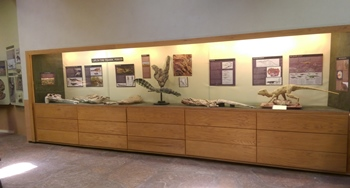 Display case at Ghost Ranch Ruth Hall Museum of Paleontology, Abiquiu, NM.