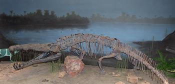 Menacing Smilosuchus. Ghost Ranch Ruth Hall Museum of Paleontology, Abiquiu, NM.