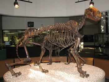 Extinct American lion. La Brea Tar Pits & Museum, Los Angeles, CA.