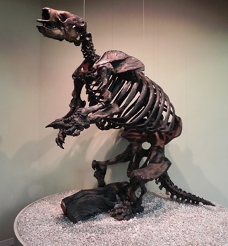 Harlan's ground sloth display, La Brea Tar Pits & Museum, Los Angeles, CA.