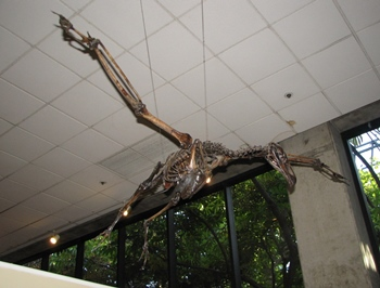Large bird of prey Teratornis on display at the La Brea Tar Pits & Museum, Los Angeles, CA.