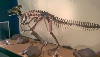 Dracorex or juvenile Pachycephalosaurus? Children's Museum of Indianapolis, Indianapolis, IN.