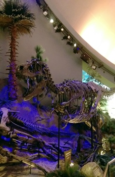 Gorgosaurus display, Children's Museum of Indianapolis. Indianapolis, IN.