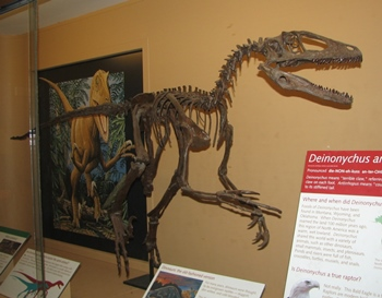 Deinonychus display, University of Michigan Museum of Natural History, Ann Arbor, MI.