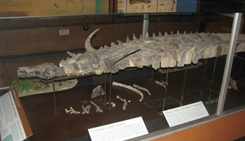 The Triassic aetosaur Desmatosuchus. University of Michigan Museum of Natural History, Ann Arbor, MI.
