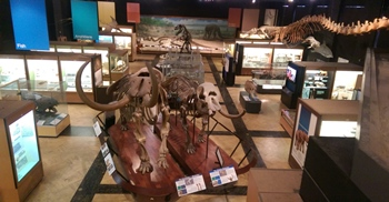 University of Michigan Museum of Natural History, Ann Arbor, MI. Photo credit: John Gnida