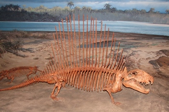 Beautiful Dimetrodon display at the Museum of Ancient Life, Lehi, UT.
