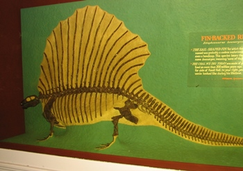 Terrific Edaphosaurus display at the Carnegie Museum of Natural History, Pittsburgh, PA.