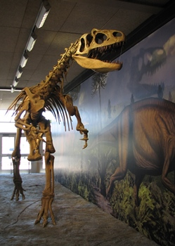 Allosaurus display at the Quarry Exhibit Hall, Dinosaur National Monument, Jensen, UT.