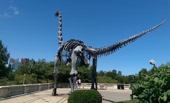 Brachiosaurus sculpture facing the Chicago skyline. The Field Museum, Chicago, IL.