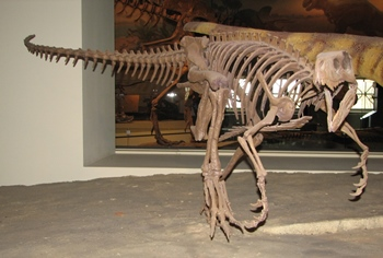 The very early dinosaur Herrerasaurus. The Field Museum, Chicago, IL.