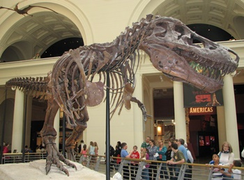 """Sue,"" the largest and most complete Tyrannosaurus. The Field Museum, Chicago, IL."