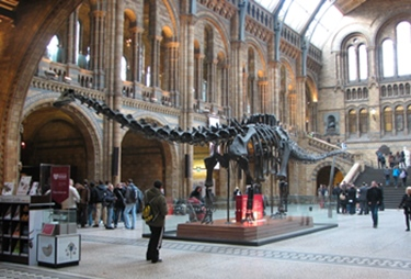 """Dippy"" the Diplodocus at the Natural History Museum, London, England."