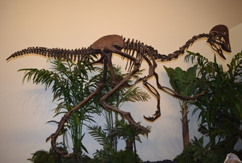 Anzu on display, Rocky Mountain Dinosaur Resource Center, Woodland Park, CO.