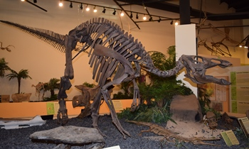 Juvenile Edmontosaurus on display. Rocky Mountain Dinosaur Resource Center, Woodland Park, CO.