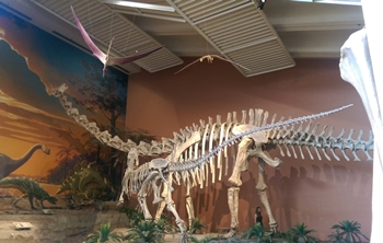 Seismosaurus vs. Saurophaganax in a beautiful Jurassic scene, New Mexico Museum of Natural History, Albuquerque, NM.