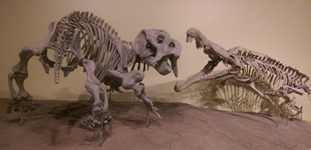 Placerias vs. Redondasaurus. New Mexico Museum of Natural History, Albuquerque, NM.