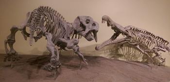Placerias vs. Redondasaurus. New Mexico Museum of Natural History, Albuquerque, NM.