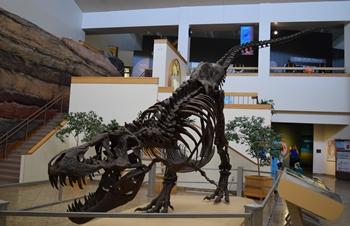 Tyrannosaurus exhibit, New Mexico Museum of Natural History, Albuquerque, NM.