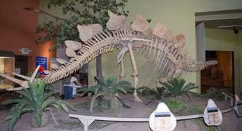 Stegosaurus display, New Mexico Museum of Natural History, Albuquerque, NM.