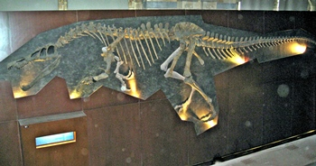 Fantastic Baryonyx fossil, Natural History Museum, London, England.