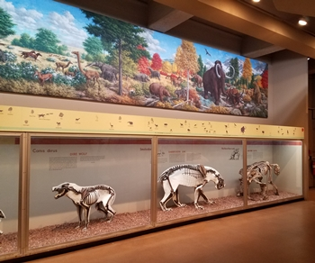 Hall of Mammals at the Yale Peabody Museum, New Haven, CT.