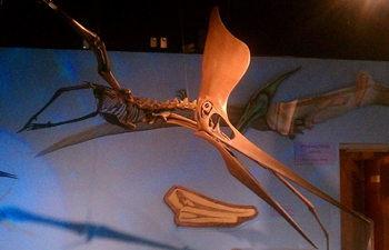 Pteranodon (or Geosternbergia) in flight, Arizona Museum of Natural History, Mesa, AZ.
