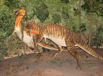 Two pachycephalosaurs engaged in battle. Denver Museum of Nature and Science, Denver, CO.
