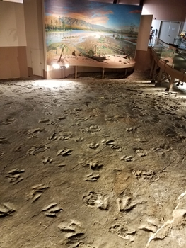 Some of the many dinosaur tracks at Dinosaur State Park, Rocky Hill, CT.