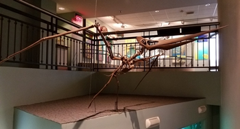Pteranodon ready to take flight. Academy of Natural Sciences of Drexel University, Philadelphia, PA.