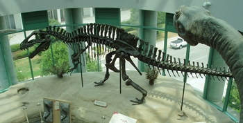 Acrocanthosaurus prowling in the rotunda of the North Carolina Museum of Natural Science, Raleigh, NC.