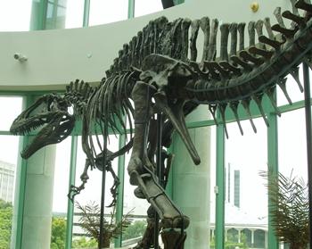 """Fran"" the Acrocanthosaurus. North Carolina Museum of Natural History, Raleigh, NC."