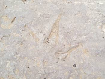 Close-up of one of the tracks at Red Gulch Dinosaur Tracksite, near Shell, WY.