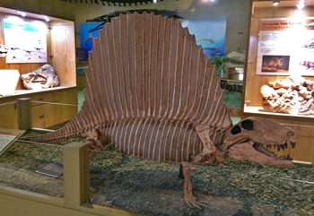 Dimetrodon display at the Wyoming Dinosaur Center, Thermopolis, WY.