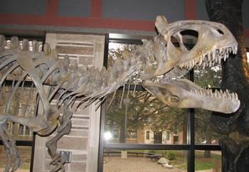 Close-up of Cryolophosaurus' head crest. Fryxell Geology Museum, Augustana College, Rock Island, IL.
