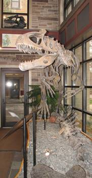 Cryolophosaurus display, Fryxell Geology Museum, Augustana College, Rock Island, IL.