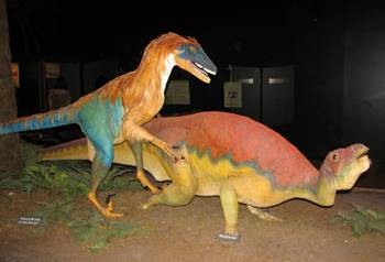 Life-size figures of Deinonychus attacking Tenontosaurus, Museum of the Rockies, Bozeman, MT.