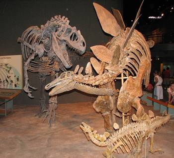 Allosaurus vs. Stegosaurus, Denver Museum of Nature & Science, Denver, CO.