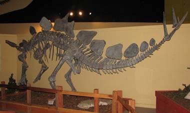 Great Stegosaurus display at the Dinosaur Journey Museum of Western Colorado, Fruita, CO.
