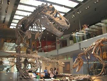 Incredible Tyrannosaurus display, Natural History Museum of Los Angeles County, Los Angeles, CA.