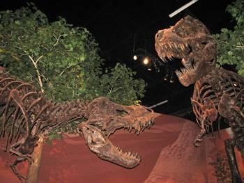 Tyrannosaurus duel at the Museum of Ancient Life, Lehi, UT.