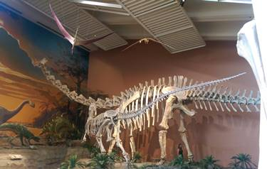 Jurassic gallery at the New Mexico Museum of Natural History, Albuquerque, NM.