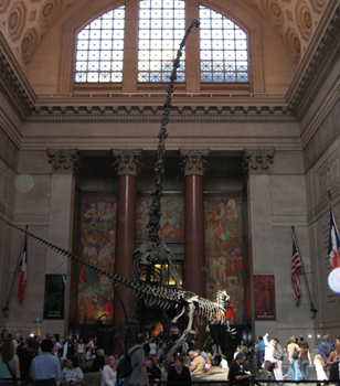 Barosaurus vs. Allosaurus in the lobby of the American Museum of Natural History, New York, NY.